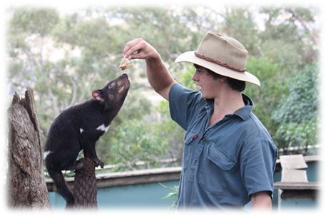 Bonorong has been a successful breeding site for Tasmanian devils for well over twenty years.