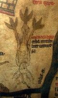 A detail of the celebrated mandrake root with roots for hair.