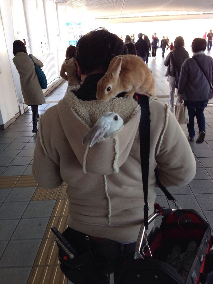 """""""Bunnyman"""" spotted in Tokyo"""