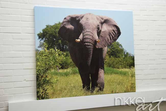 Foto op Canvas - realisatie van Nikkel-art.be Wilt u een mooie decoratie aan de muur om uw woonkamer wat sfeervoller te maken? Of zoekt u een mooi en persoonlijk cadeau voor een goede vriend? Denk dan eens aan een foto op canvas van Nikkel-art.be
