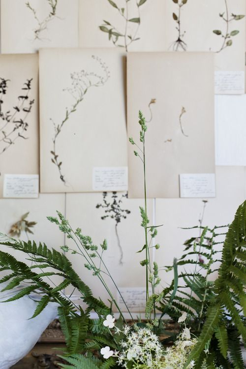 Using botanical sketches instead of wallpaper