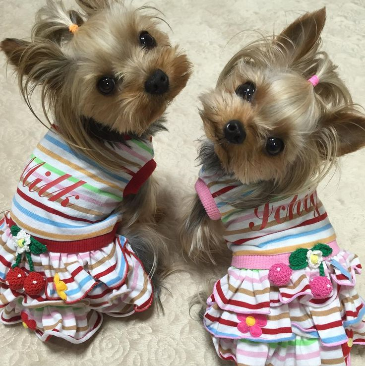 I don't usually like to see dogs in dresses but this is just to cute for words, and the pups don't seem to be bothered!