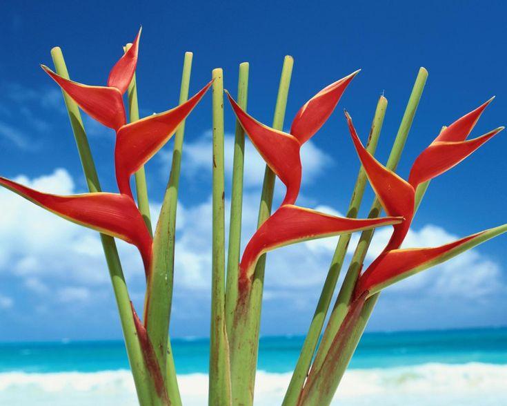 Тропические цветы 1280x1024
