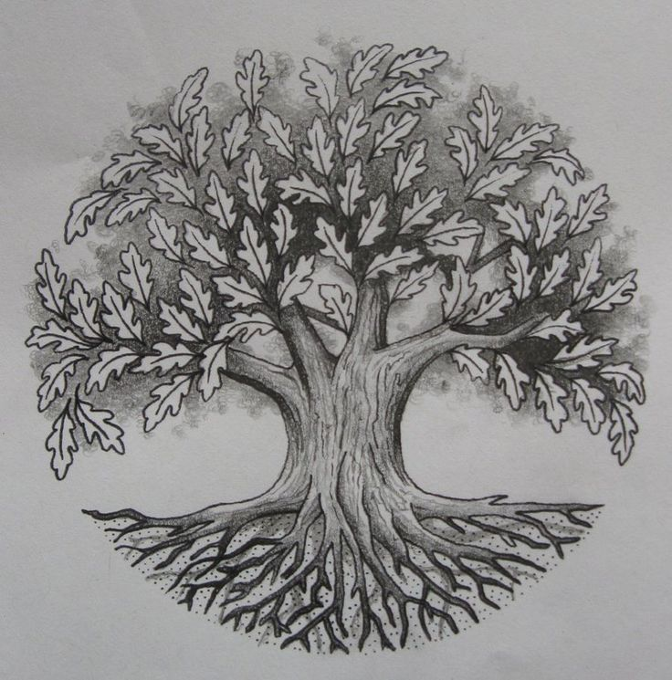 Tree Of Life Ideal Size Of A 48: 25+ Best Ideas About Oak Tree Tattoo On Pinterest