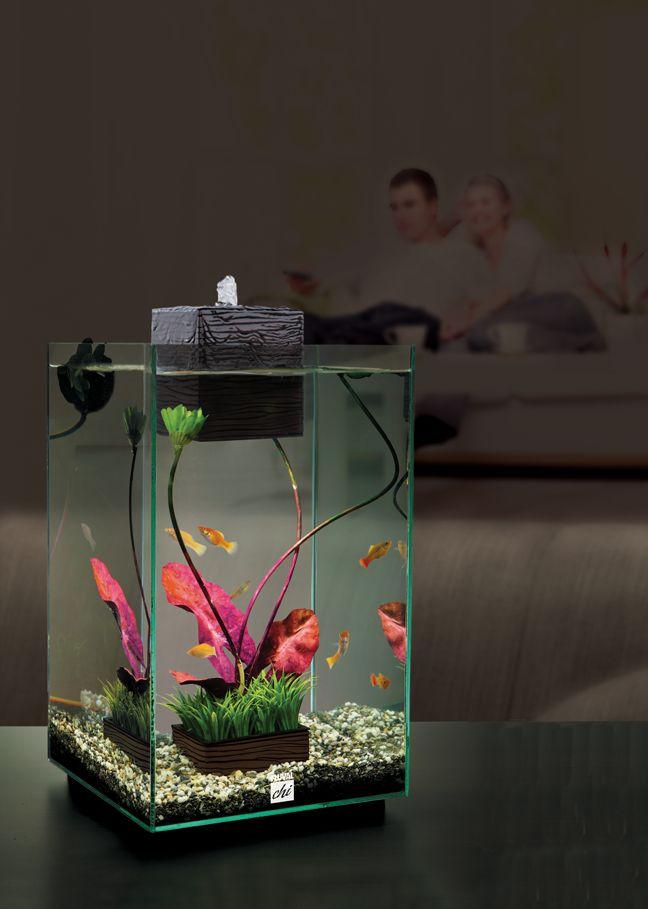 Fluval chi aquariums fish pinterest for Fluval chi fish tank