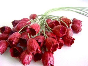 Necklace Holanda chili red