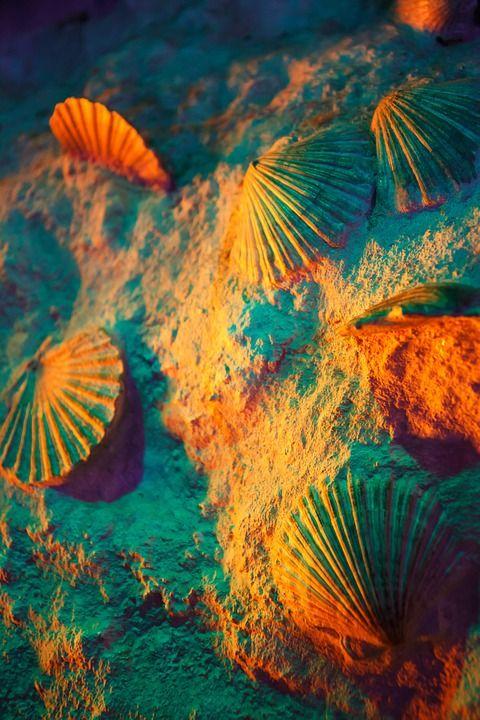 아트, 색, 다채로운, 많은, 선박, 자연, 패턴, 바다, 조개, 셸, 결, 오렌지, 녹색