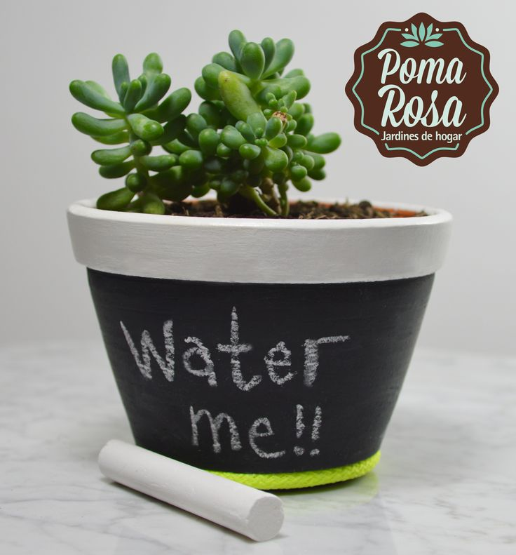 Escribe el mensaje que quieras!! Materitas unicas hechas por nosotros   Planta: Suculenta