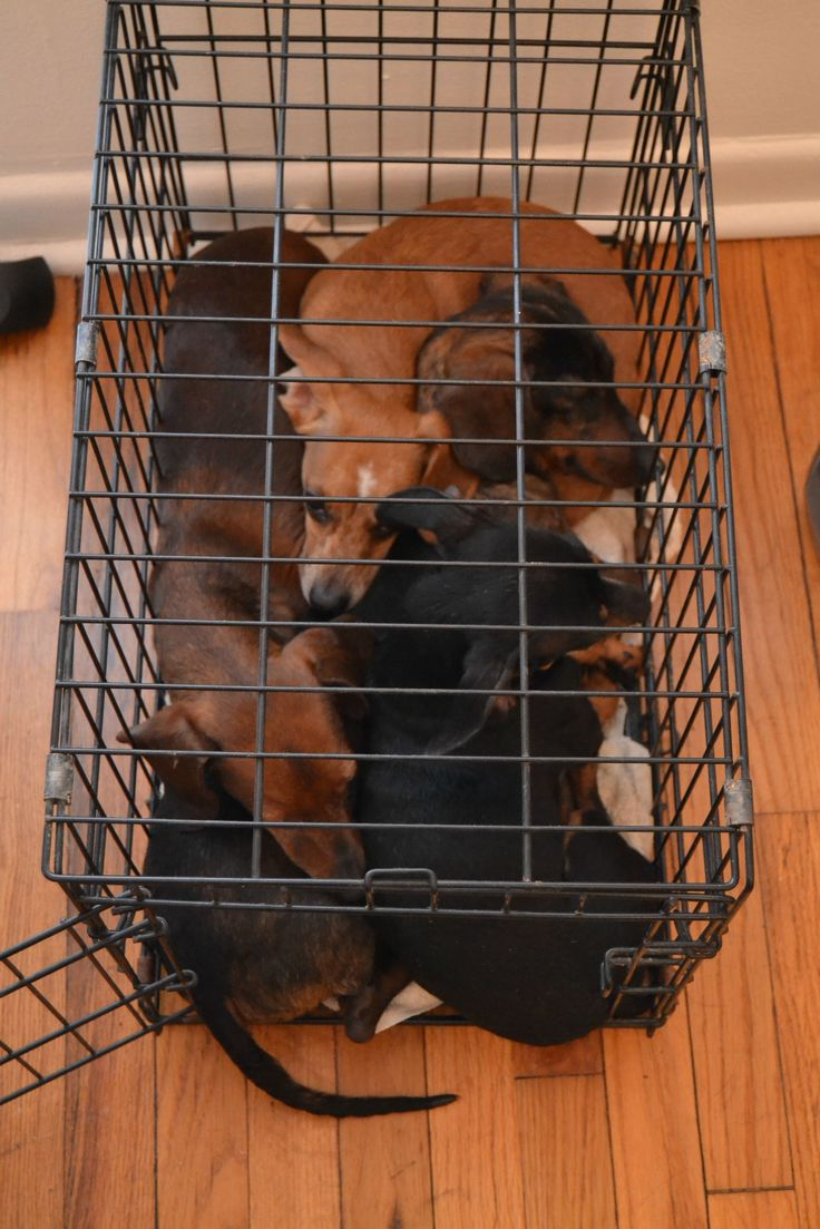 for the love of balenciaga Dachshund Trap  Point space heater at crate    Love for Animals      Dachshund  Crates and Spaces
