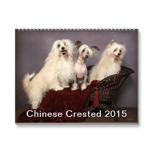 Chinese Crested 2015 Calendar