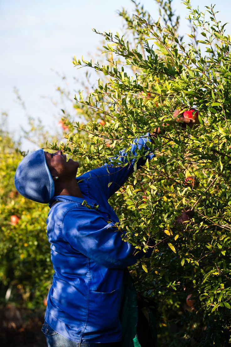 Happiness in the pomegranate orchard! Love what you do!