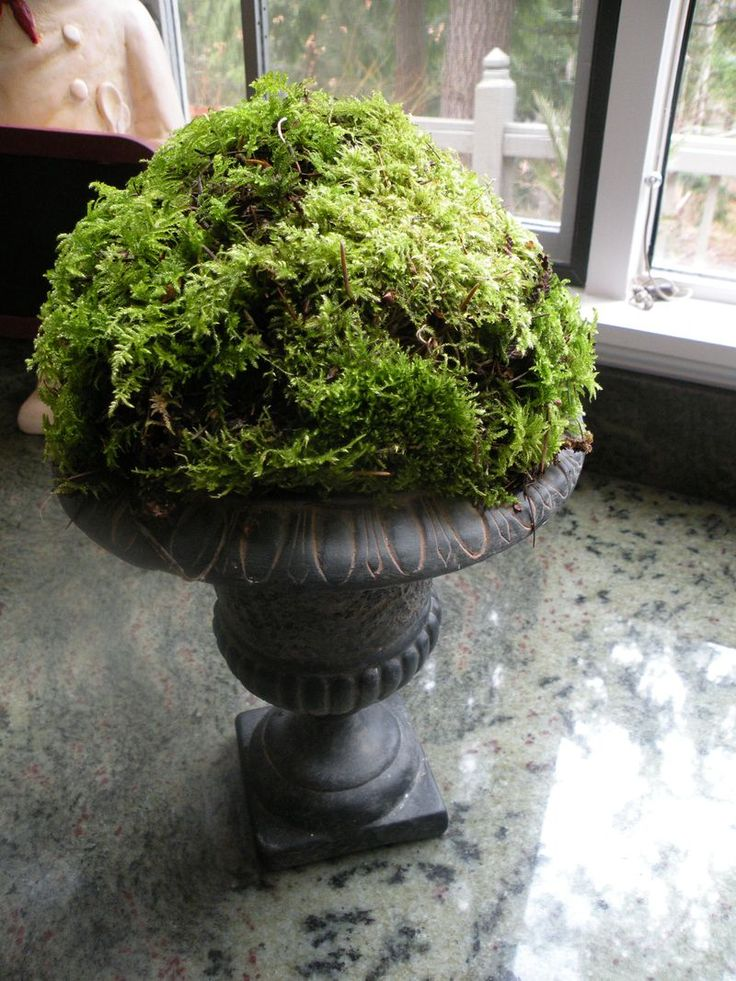 Put a styrofoam ball into the container and cover with moss...instant decorating!