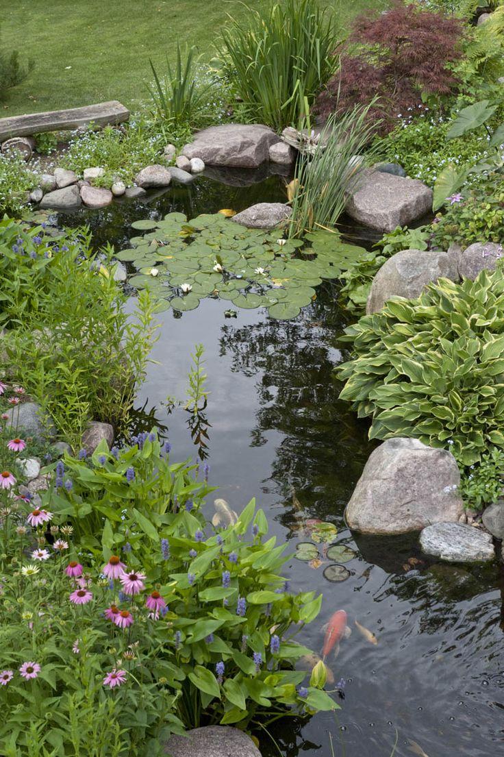 Best 25 pond landscaping ideas on pinterest water pond for Garden fish ponds