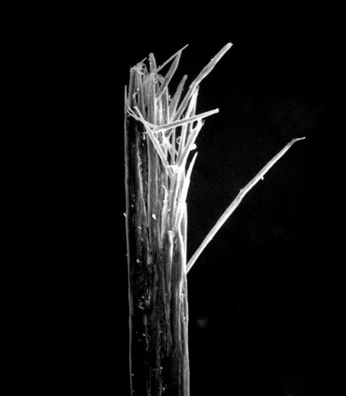 Split Ends Microscope | www.pixshark.com - Images ...