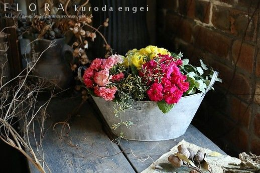 1月の園芸教室見本です。 |フローラのガーデニング・園芸作業日記