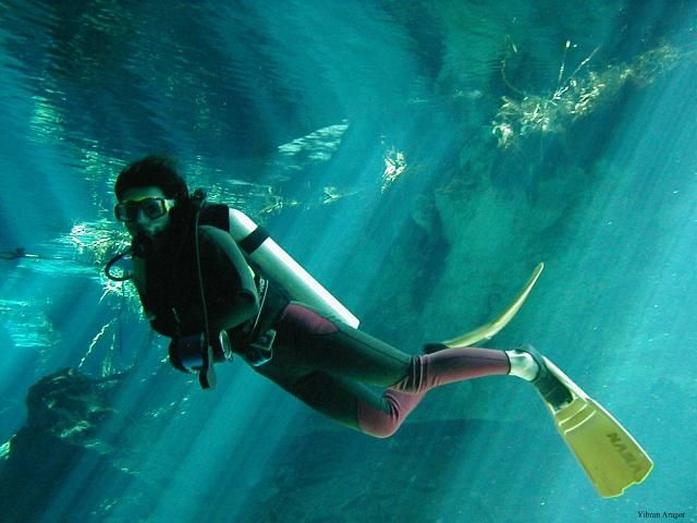 Best Diving Images On Pinterest Scuba Diving Equipment - The snorkeling guide to florida 10 spots for underwater exploring