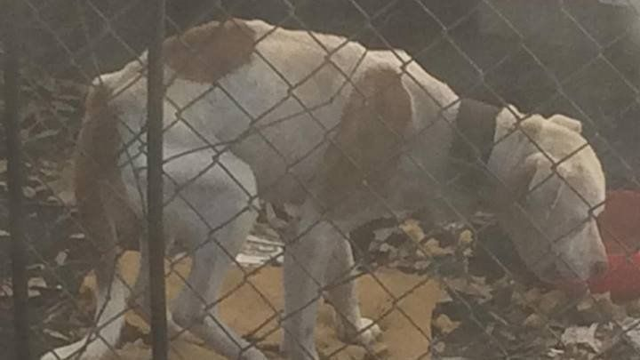 Everett Harris, Dr. Woody Wilson, Caddo Parish Commissioners: Immediately Release T-Bone & Lucky to a Rescue Organization | There are numerous rescues stepping up to help these two dogs and they should and must be released quickly if they are to survive. Click for details and please SIGN and share petition. Thanks.