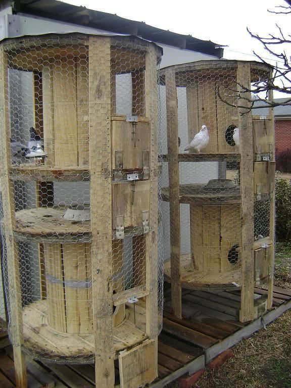Recycle old wire spools into chicken coops