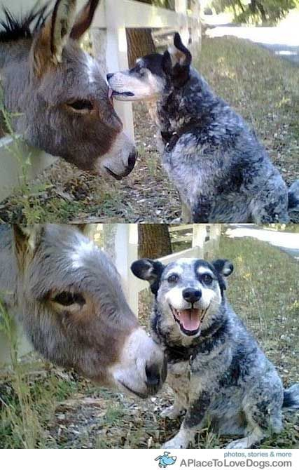 new friend, yey!: Animals, Dogs, Funny Stuff, Funnies, Ass, Taste