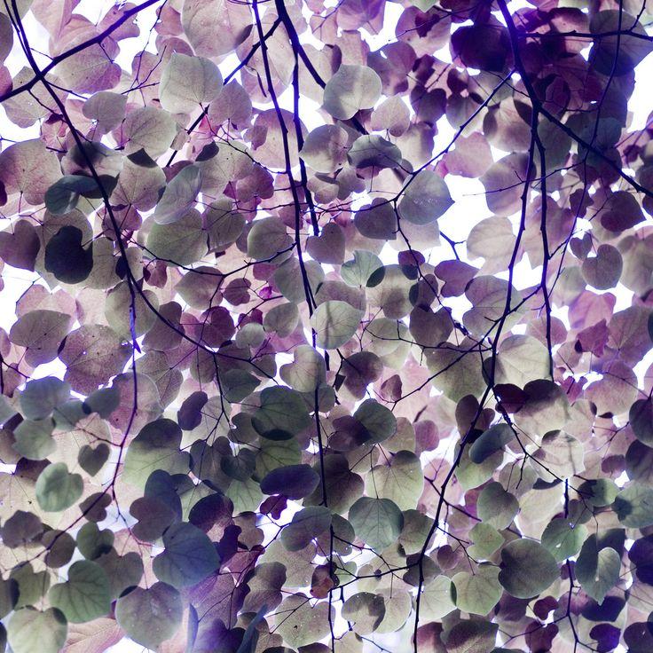 Pretty purple heart lilac vine color and pattern for Purple mauve color