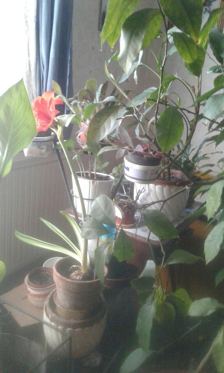 A többi virággal együt