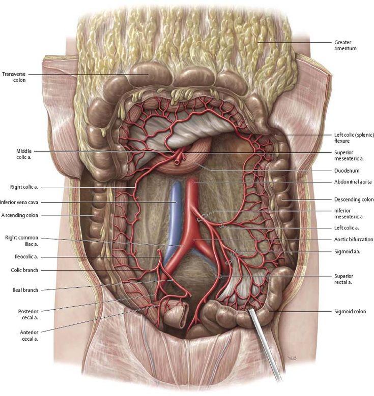 Best 77 medicine images on Pinterest | Anatomía humana, Cuerpo ...