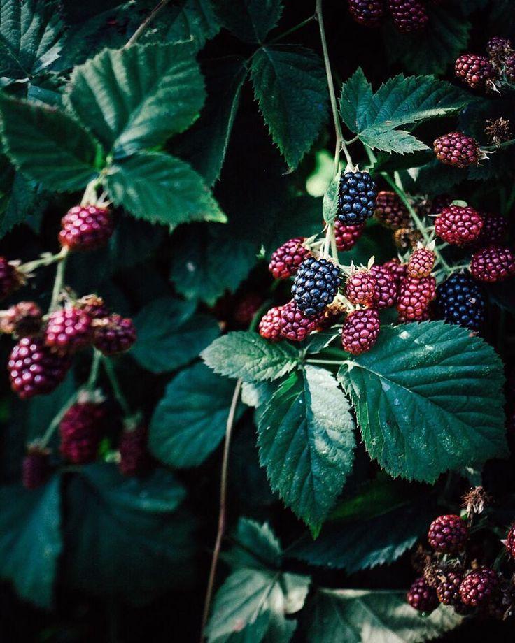 """4,681 """"Μου αρέσει!"""", 102 σχόλια - Mai Yanagisawa (@toile_blanche) στο Instagram: """"Blackberry season😋❤️ 〆 ブラックベリーが美味しい季節です✨ 〆 #flowersofinstagram #flowermagic #flowerpower #dsfloral…"""""""