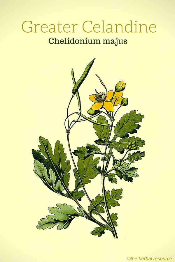 benefits of herbal medicine essay 521 words essay on herbal medicines or importance of herbs in medical world  benefits of herbal medicine.