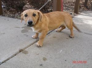 Same Day Dog Adoption Illinois