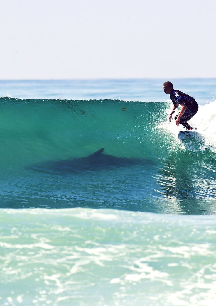 Shark!!!!!!!!!!! What are you doing surfer get the f out of there?!!?!?!?!!?!?!!? This is my worst fear!!!!!!!!