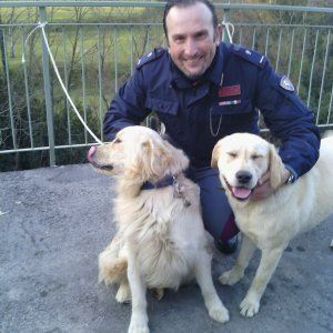 Offerte lavoro Genova  Erano scappati dal giardino di casa  #Liguria #Genova #operatori #animatori #rappresentanti #tecnico #informatico La polizia stradale di Chiavari recupera due cani a Donega
