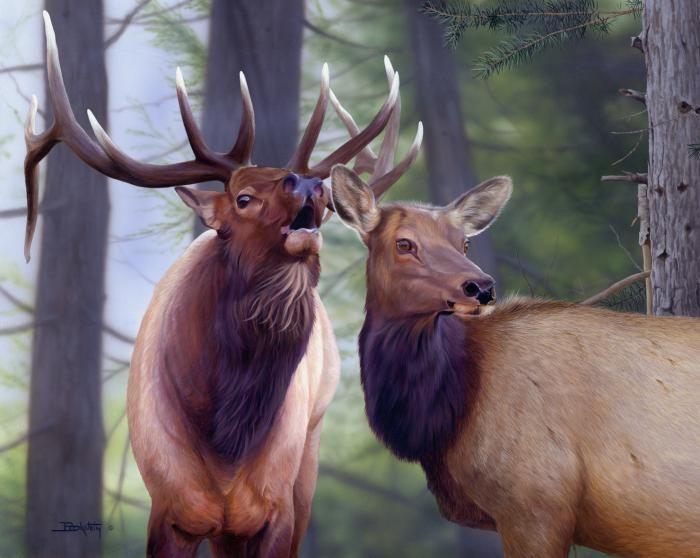 Larry Beckstein Wildlife Artist Elk Painting Wildlife