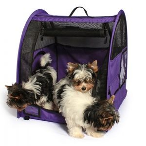 13 Journey Pet Equipment Worthy of Your Canine