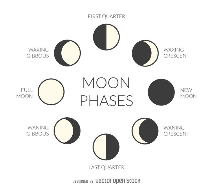 Illustration featuring the phases of the moon. Design includes simple moon drawings of every phase with their respective names. In…