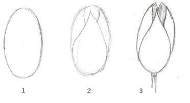 Tekenen als hobby [ planten en bloemen tekenen ] :: Introductie ::
