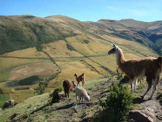 La UNESCO ha añadido a la lista del Patrimonio Mundial a la Qhapac Ñan, sistema de rutas andino que en el periodo inca cubrió gran parte del territorio de los Andes: http://www.guiarte.com/noticias/sistema-vial-andino-patrimonio-mundial.html