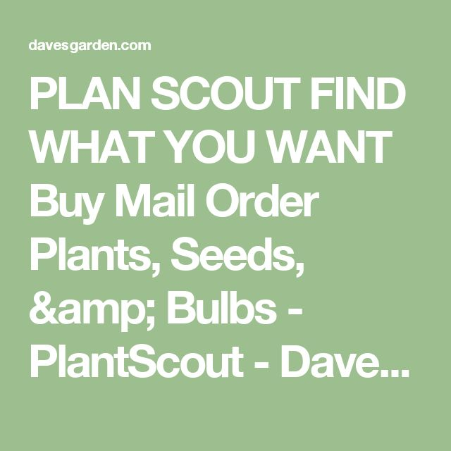 PLAN SCOUT FIND WHAT YOU WANT Buy Mail Order Plants, Seeds, & Bulbs - PlantScout - Dave's Garden