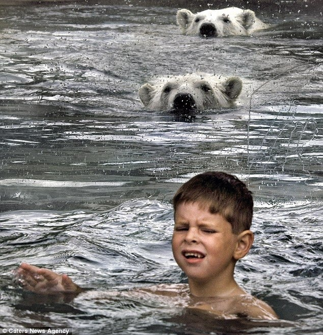 cochrane, ontario polar bear habitat
