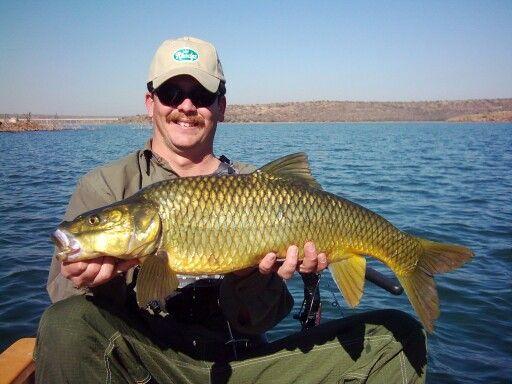Largemouth yellowfish, flyfishing Taung dam, North West province, South Africa