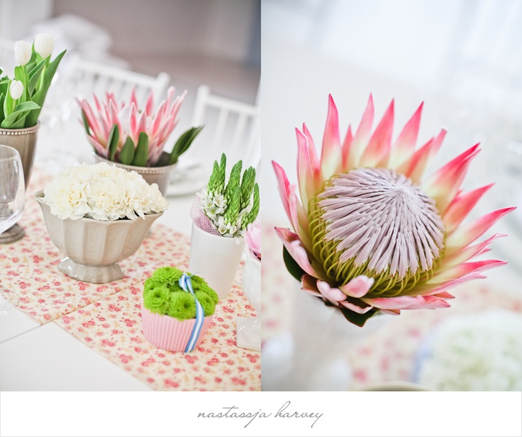 33 best images about protea weddings on pinterest nelson for King protea flower arrangements