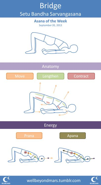 Asana of the Week: Bridge