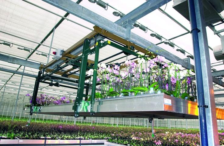Orchideeën kweken