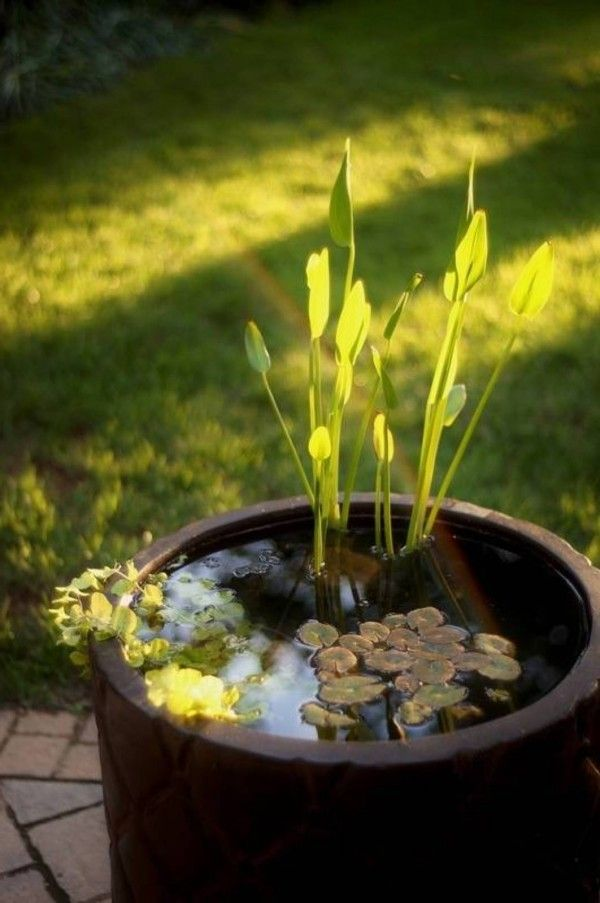 Ideas Of Water Garden Containers Decor Ideas Pinterest