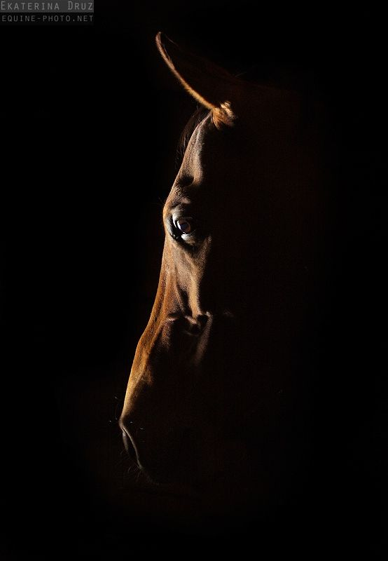 Ахалтекинцы - Фотографии Лошадей Екатерины Друзь