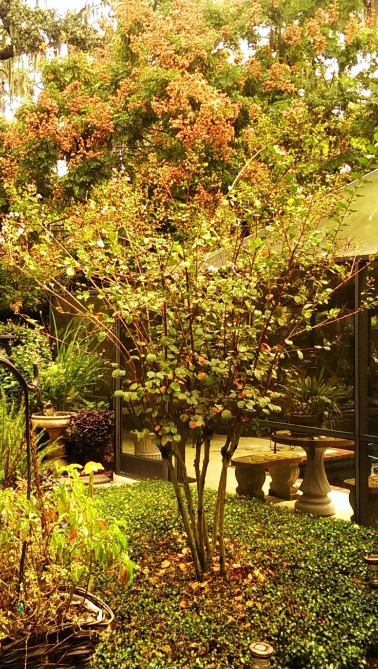145 best Lisa\'s home garden images on Pinterest | Gardening ...