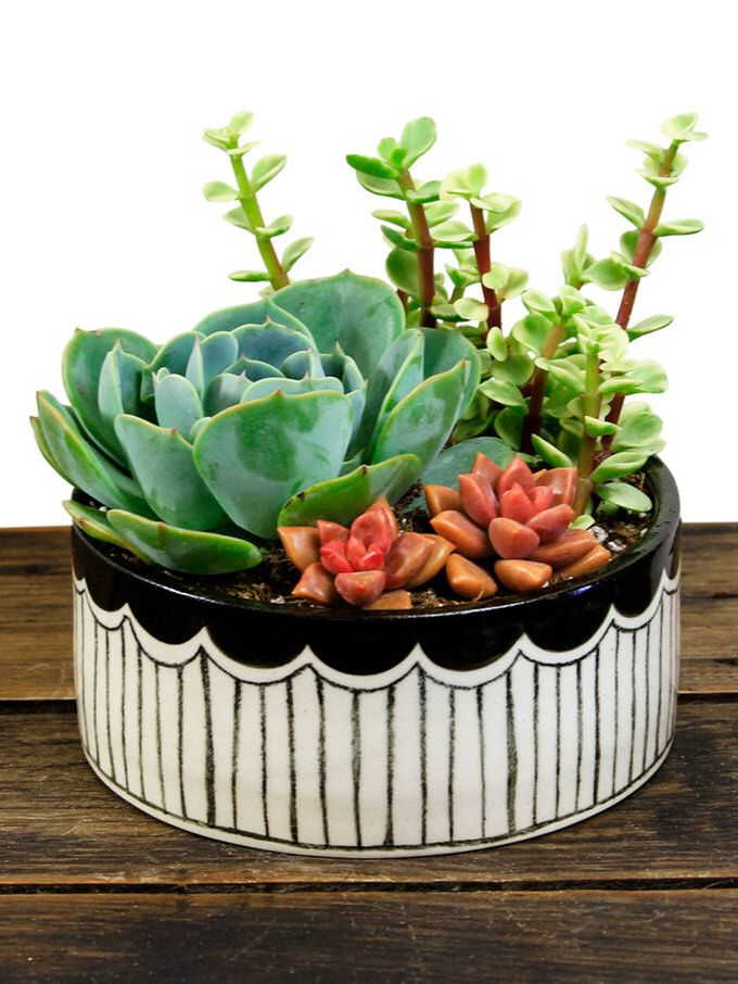 Scalloped Succulent Kit from Coffee Table Style: Decor