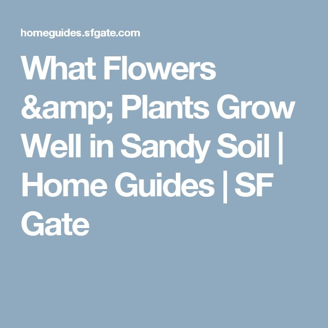 What Flowers & Plants Grow Well in Sandy Soil | Home Guides | SF Gate