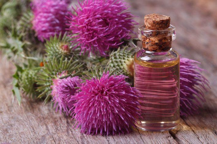 Ostropest plamisty to bardzo popularny chwast, który stosowany jest od tysiącleci m.in. jako lek na wątrobę. Jakie jeszcze cenne właściwości posiada olej z ostropestu?
