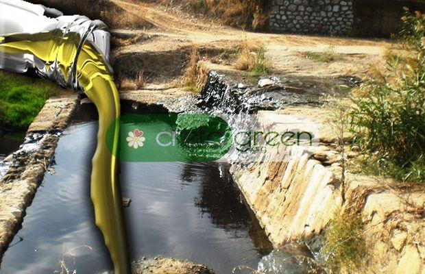 Θέμα CretaGreen.org: «Πέφτει» η παραγωγή στις ελιές λόγω του κατσιγάρου!