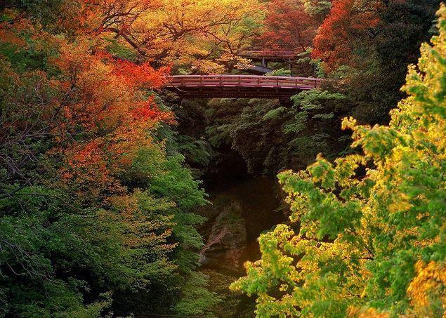 """【名勝 猿橋の紅葉情報】歌川広重の浮世絵「甲陽猿橋之図」にも描かれた日本三奇橋のひとつ。橋脚を使わずに両岸から張り出した4層のはね木によって支えられている。11月にかけてカエデ、ケヤキ、イチョウが見ごろを迎える。ウォーカープラスの""""紅葉名所2017""""では、全国約700ヶ所の紅葉情報を掲載 !"""